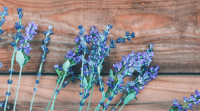 lavender for ayurveda and aromatherapy