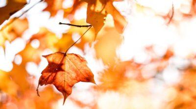 fall leaves during vata season